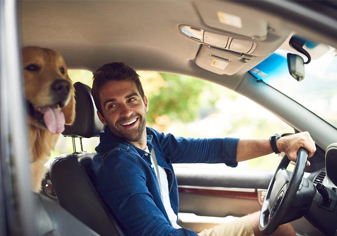 Trasporto cani in auto: regole per viaggiare in sicurezza